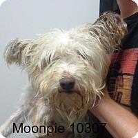 Adopt A Pet :: Moon Pie - Greencastle, NC