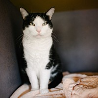 Adopt A Pet :: Teresa - Lexington, KY
