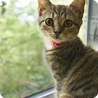 Adopt A Pet :: Maisie - Medina, OH