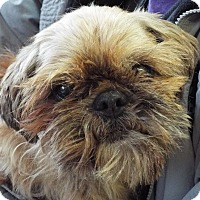 Adopt A Pet :: Mr. Christmas - Grants Pass, OR