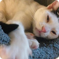 Adopt A Pet :: BUBBAH - Little Neck, NY