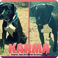 Adopt A Pet :: Karma - Tower City, PA