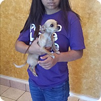 Adopt A Pet :: Taffy - San Antonio, TX