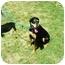 Photo 2 - Doberman Pinscher/Labrador Retriever Mix Dog for adoption in Santee, California - Layla