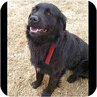 Adopt A Pet :: Hugo - Denver, CO