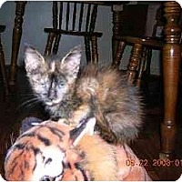 Adopt A Pet :: Amber - Union, SC