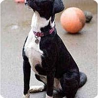 Adopt A Pet :: Abby - Portland, OR