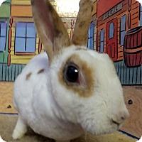 Adopt A Pet :: Cocoa - Foster, RI
