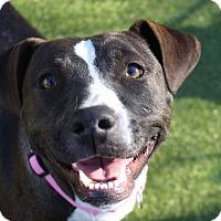 Adopt A Pet :: Lucy - Naugatuck, CT