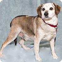Adopt A Pet :: Magic - Mt. Prospect, IL