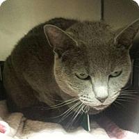 Adopt A Pet :: Zephyr - Herndon, VA