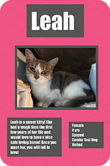 Domestic Shorthair Cat for adoption in CLEVELAND, Ohio - Leah