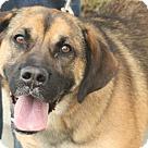 Adopt A Pet :: Bucky