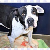 Adopt A Pet :: George - San Jacinto, CA