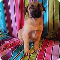 Adopt A Pet :: Selfie - Houston, TX