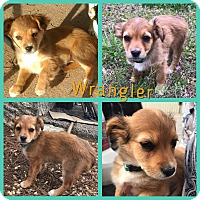 Adopt A Pet :: Wrangler - Gainesville, GA