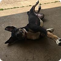 Adopt A Pet :: DRACO - HARRISBURG, PA