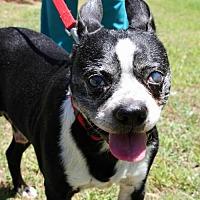 Adopt A Pet :: Odis McGee  GA - various cities, FL