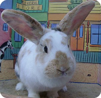 Harlequin Mix for adoption in Foster, Rhode Island - Cupid