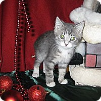 Adopt A Pet :: Element - Clearfield, UT