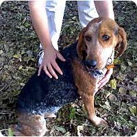 Adopt A Pet :: Gretel - Scottsdale, AZ