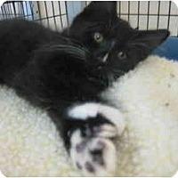 Adopt A Pet :: MJ, Paris, & Blanket - Deerfield Beach, FL