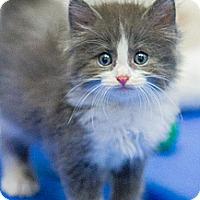 Adopt A Pet :: Hampton - Chicago, IL