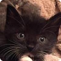 Adopt A Pet :: Moonracer - Reston, VA