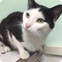 Adopt A Pet :: Mango - Canastota, NY