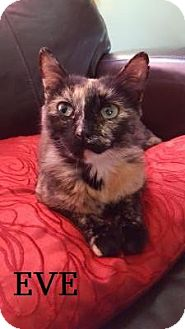 Domestic Shorthair Cat for adoption in Huntsville, Ontario - Eve - Adopted December 2016
