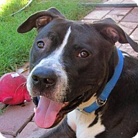 Adopt A Pet :: Sully - Phoenix, AZ