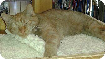 Domestic Shorthair Kitten for adoption in Whittier, California - Duke