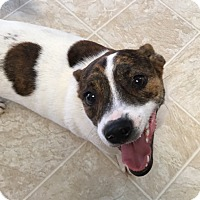 Adopt A Pet :: Davey in San Antonio - San Antonio, TX