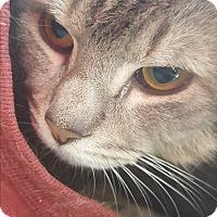 Adopt A Pet :: Melvin Doo - Gadsden, AL