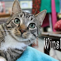 Adopt A Pet :: Winslow - Wichita Falls, TX