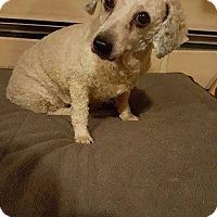 Adopt A Pet :: Pearl - Homer, NY
