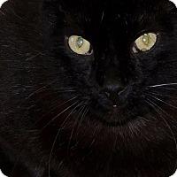 Adopt A Pet :: Captain - Joplin, MO