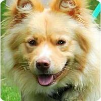 Adopt A Pet :: EVAN(WOW!!!--GORGEOUS!!!) - Hendersonville, TN