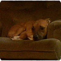 Adopt A Pet :: Bacchus - courtesy post - Cincinnati, OH