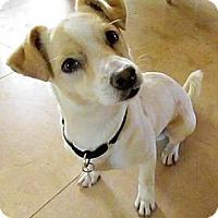 Adopt A Pet :: Charles - Scottsdale, AZ