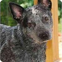 Adopt A Pet :: JD - Siler City, NC