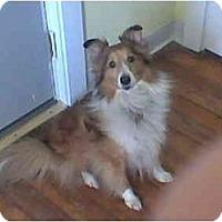 Adopt A Pet :: Elvis - Indiana, IN