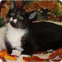 Adopt A Pet :: Payden - Mobile, AL