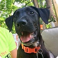 Adopt A Pet :: *Gator - PENDING - Westport, CT