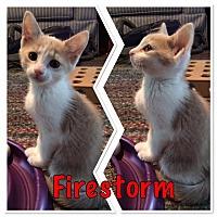 Adopt A Pet :: Firestorm - McDonough, GA