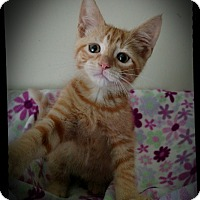 Adopt A Pet :: Carmel (adoption pending) - Richmond, VA