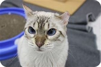 Domestic Shorthair Cat for adoption in Raleigh, North Carolina - Ezra