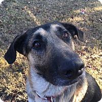 Adopt A Pet :: Gunter (bonded to Greta) - Portland, ME