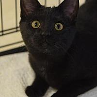 Adopt A Pet :: Dratini - DFW Metroplex, TX