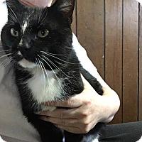 Adopt A Pet :: Ronin - St. Louis, MO